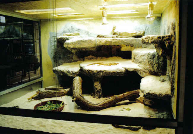 chuckwalla terrarium